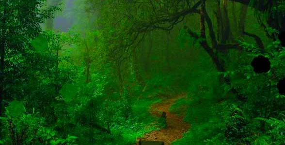 Wow Miraculous Daylight Forest Escape