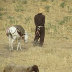 Local with Donkey