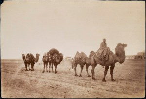 Sevruguin, Antoin,; b&w ; 20 cm. x 13.4 cm.; Stephen Arpee Collection of Sevruguin Photographs. Freer Gallery of Art and Arthur M. Sackler Gallery Archives. Smithsonian Institution, Washington D.C., 2011.