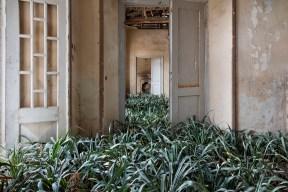 Plants between a doorway