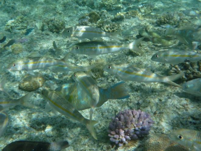Snorkeling at the natural swimming pool, Bay d'Oro