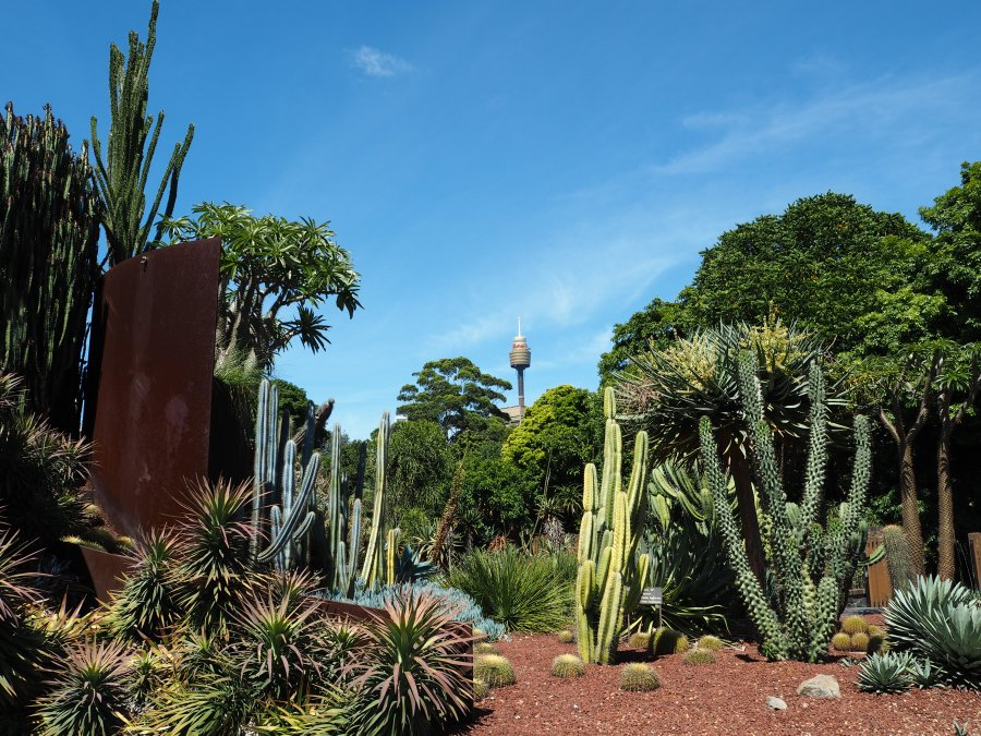 Cactus gardens in the Royal Botanic Gardens