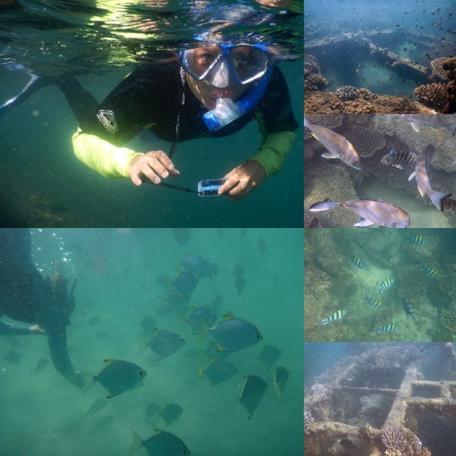 Beautiful marine life at the wrecks