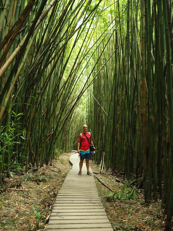 The bamboo forest of the Pipiwai trail