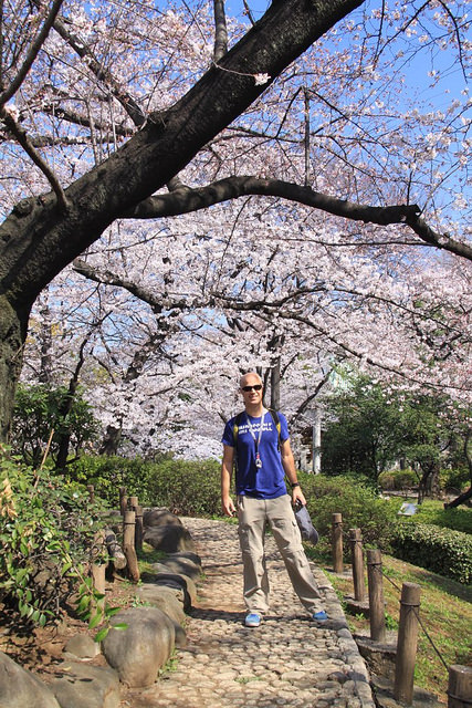 Walk under the cherry blossoms of Sumida Park