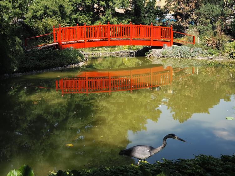 Interesting bird in the Botanic Gardens