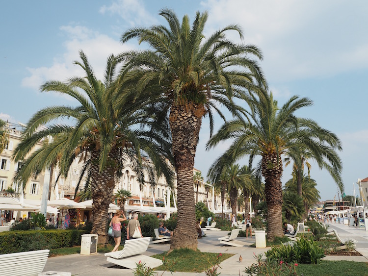 Palm trees on the Riva promenade