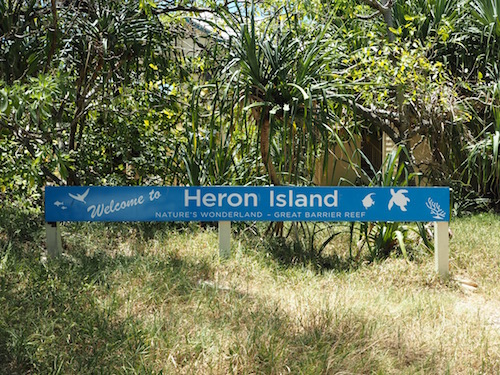 Welcome to Heron Island!