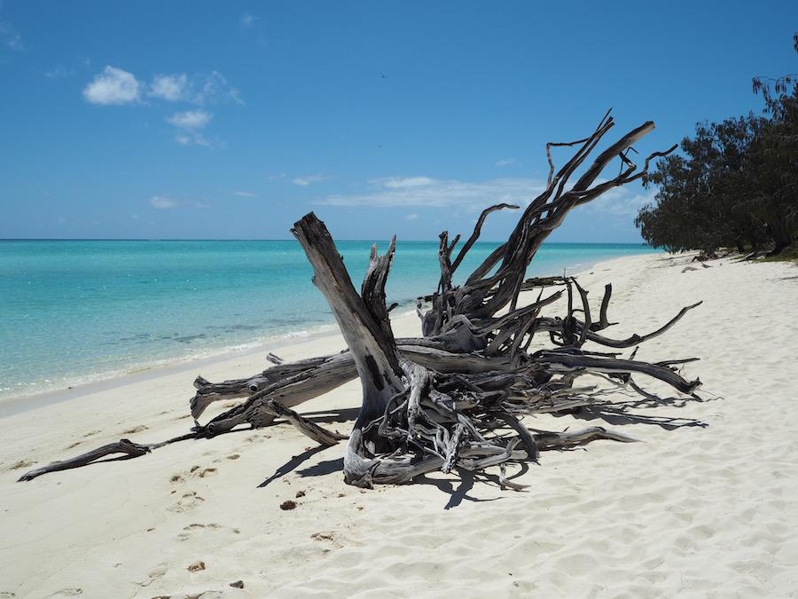 Dead tree trunk on the beach.