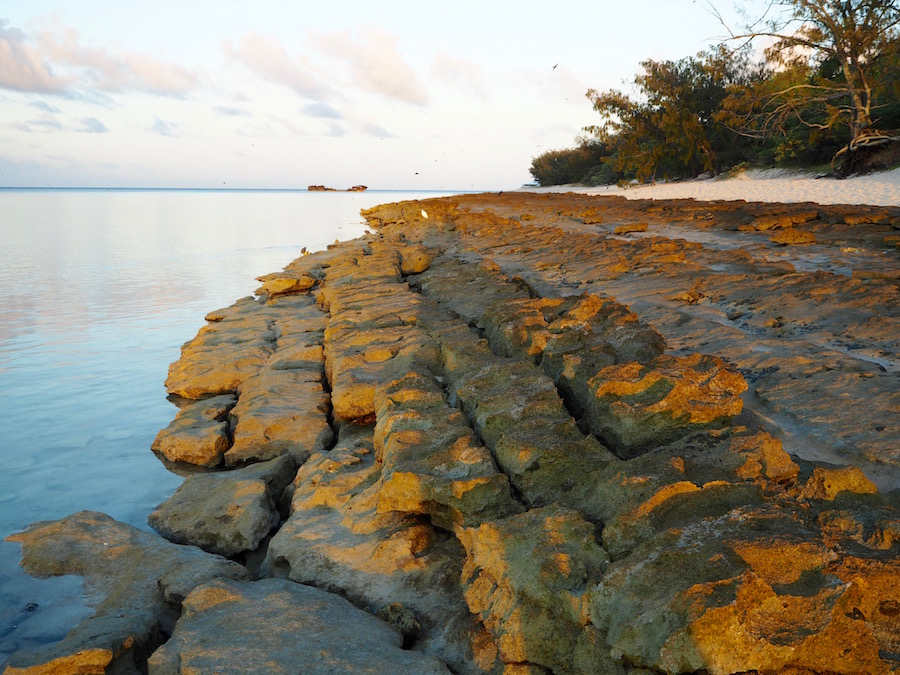 It's a brand new day on Heron Island!