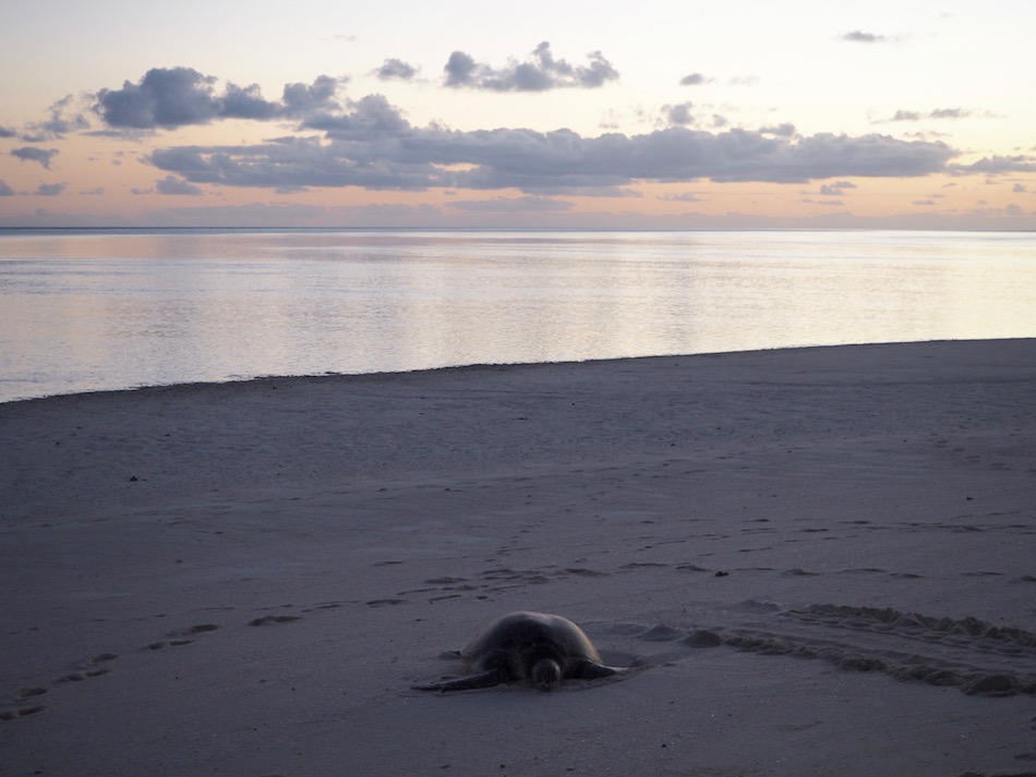A turtle resting on the beach at sunrise.