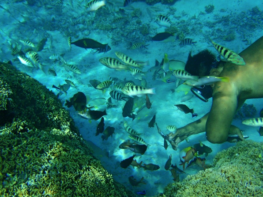 Snorkelling in the coral garden.
