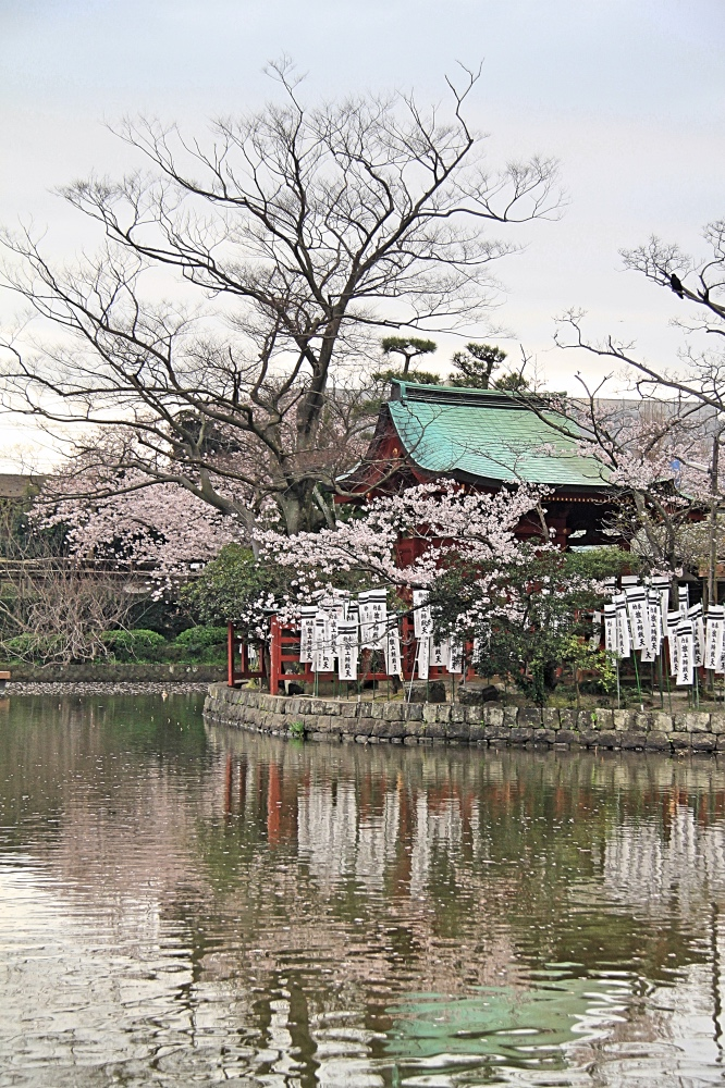 The main pond of the Tsurugaoka Hachiman-gu shrine.