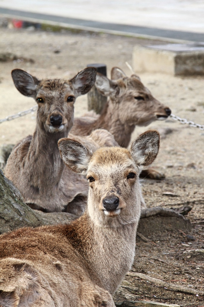Nara's friendly locals!