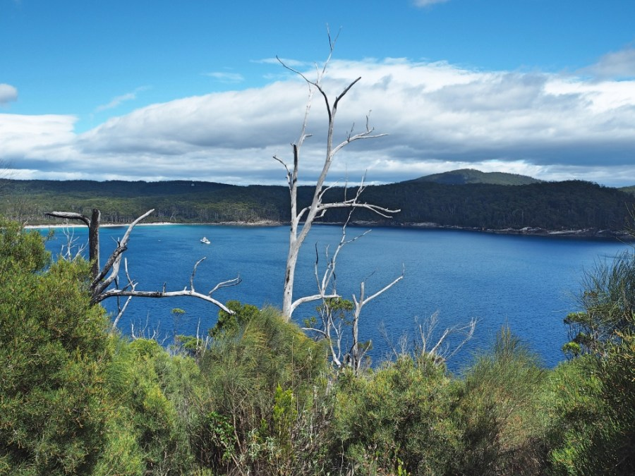 View of Fortescue bay at the start of the hike.