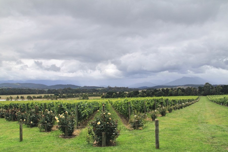 The grounds of Domaine Chandon.