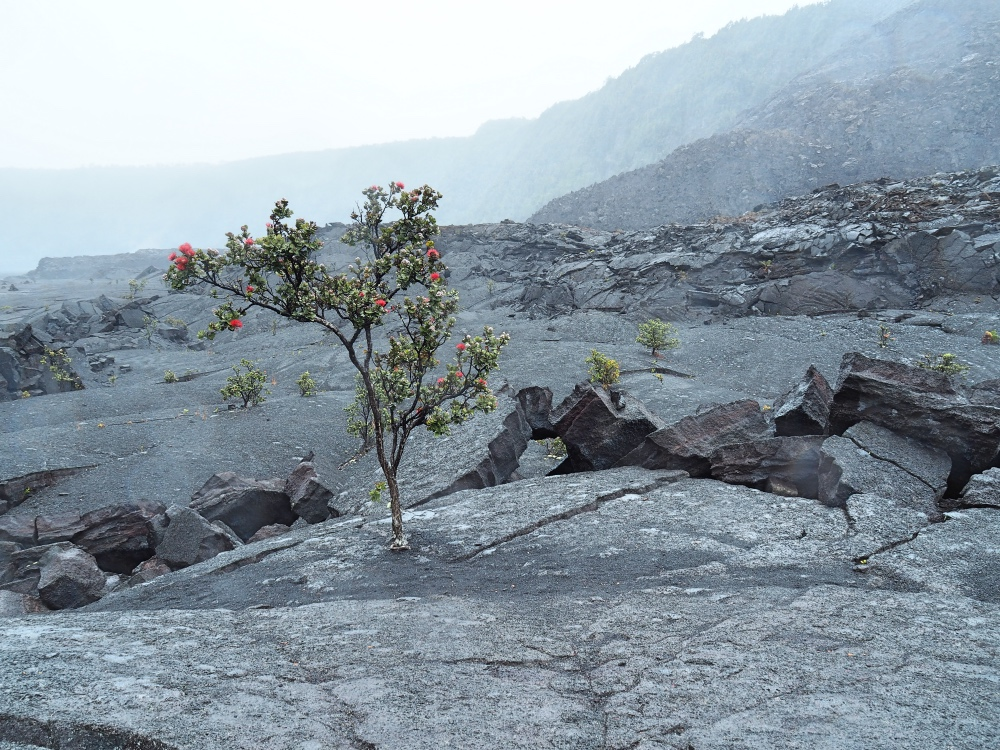 Hiking the Kilauea Iki trail in the rain!
