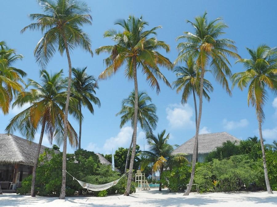 Palm trees everywhere!