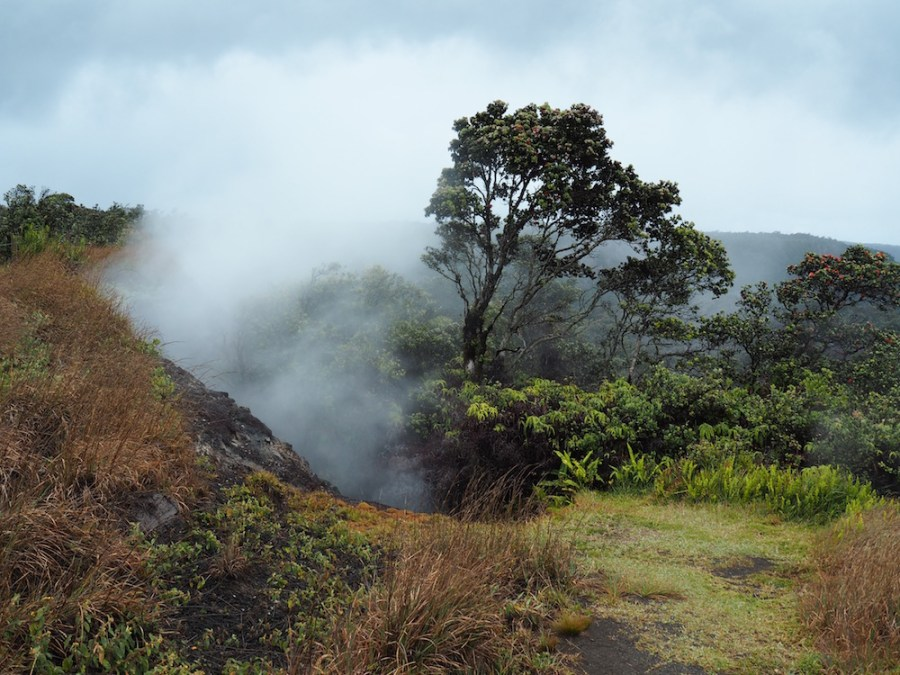 A steam vents on the Sulphur Banks trail.