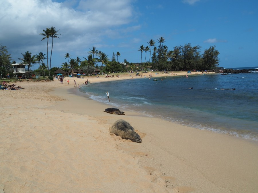 Two locals sleeping on Poipu beach.