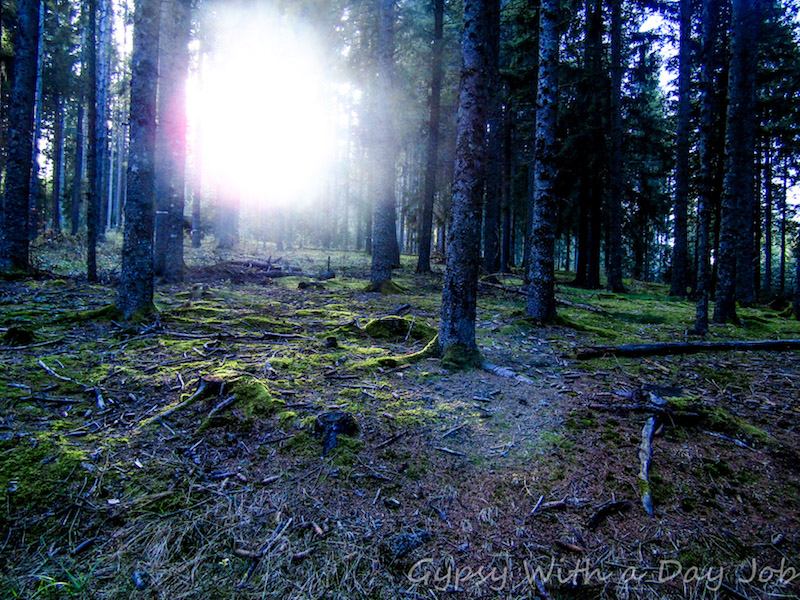 The sun shining through the Black Forest
