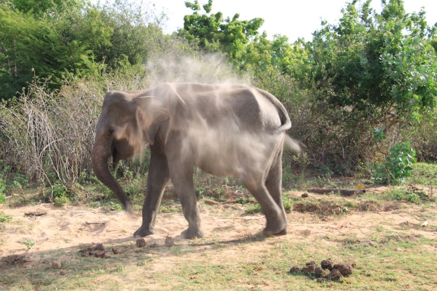 An elephant trying to cool down.