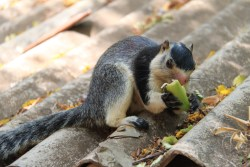A hungry squirrel!