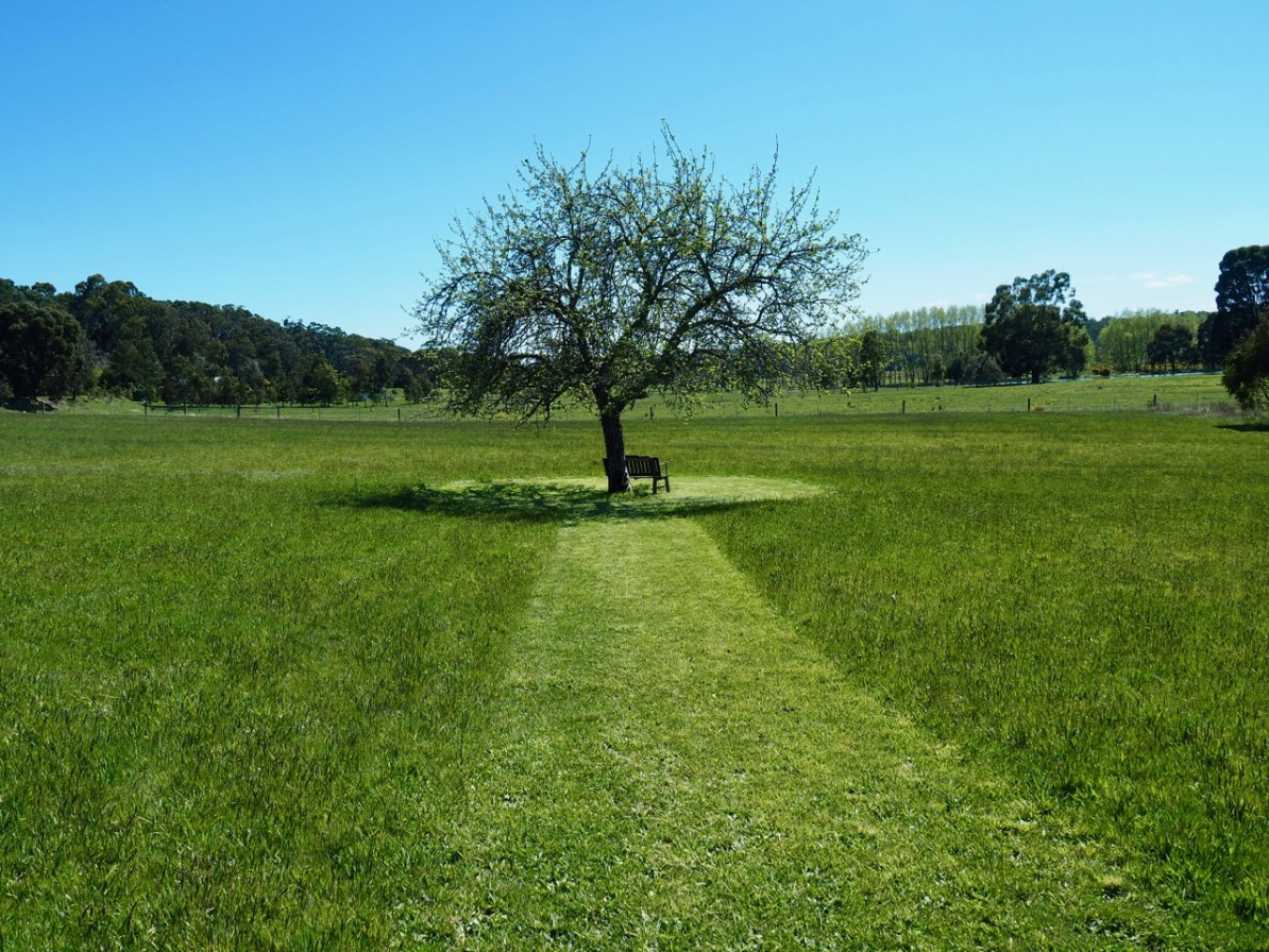 The green field of Hollow Log Estate in spring.