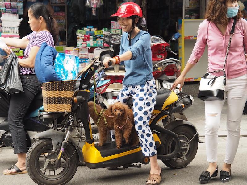 Dogs on motorbike