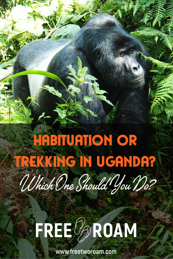 Should you do the Habituation or the Trekking Experience in Uganda?