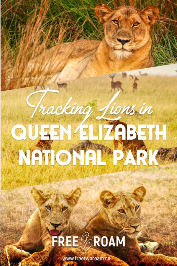 Our Lion Tracking Experience in the Queen Elizabeth National Park