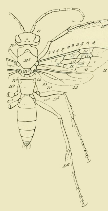 Insect Diagram | Free Vintage Art