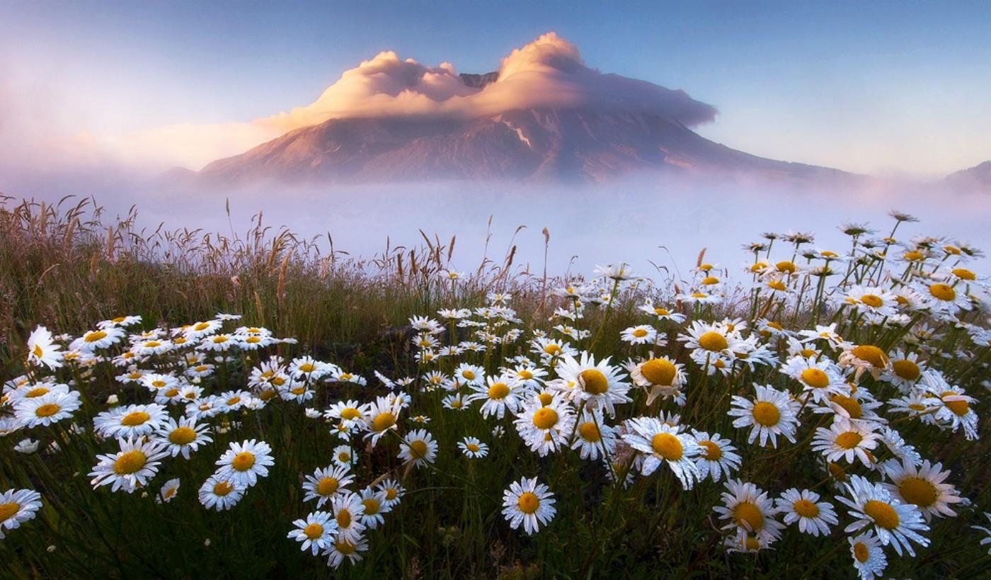 Flowers Fog Beautiful Mountain Daisies New Flower Desktop Wallpaper