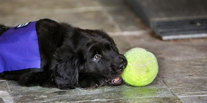 Aria as a puppy
