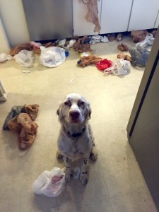Winston gets dog shamed