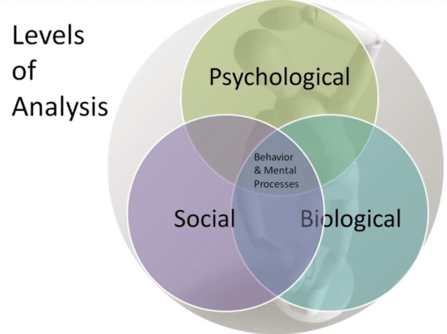 Levels of Analysis for the Biopsychosocial Model (BPS)