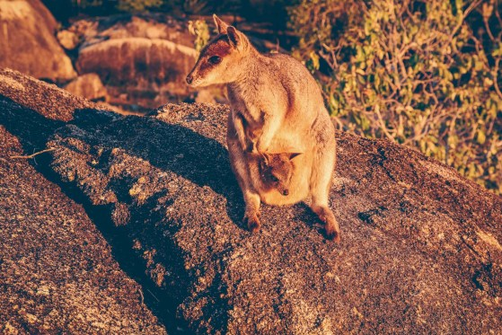 Australian Camping adventure