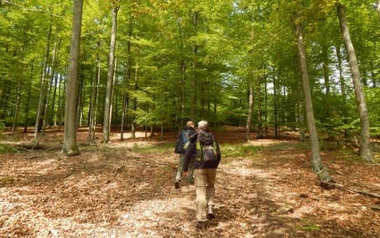 Kleine Wandertour durch den Büdinger Wald bei Gründau-Gettenbach