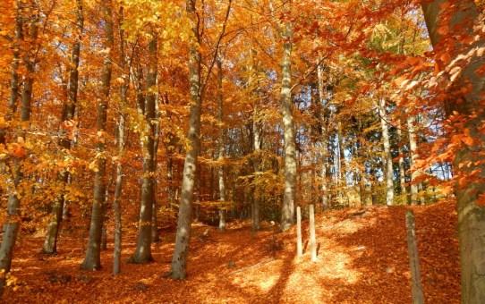 Herbstzauber im Spessart in Unterfranken. Mespelbrunn und Volkersbrunn.