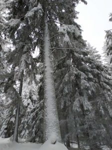 Schneeschuhwanderung Fichtelgebirge Haberstein, Große Kösseine, Burgsteinfelsen, Kaiser-Wilhelm-Felsen