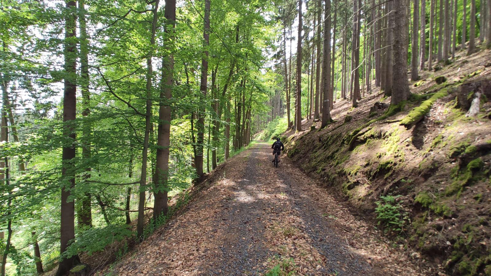 Mountainbiken auf den  Gerichtswald-Pfaden – Spessartbiken Tour 20