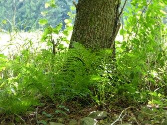 Bilder aus dem Tharandter Wald - Bild 7
