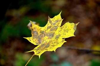 Herbst in Freital