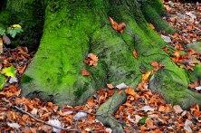 Alte Bäume mit Moos