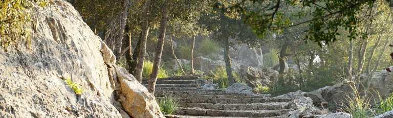 Klassenfahrt Mallorca Spazierweg im Wald