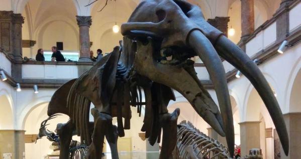 Museum München