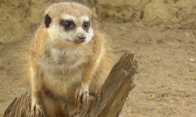 Eberswalde eintritt zoo Häufige Fragen