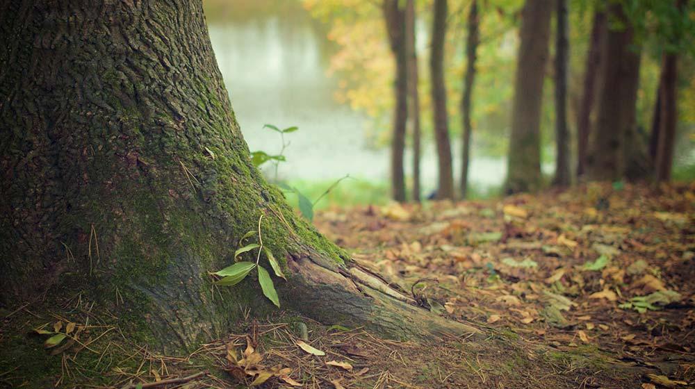 Tree Trimming & Brush Drop off Schedule