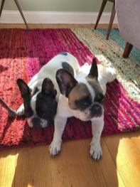 lucy-and-coco5