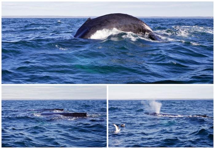 baleines-1